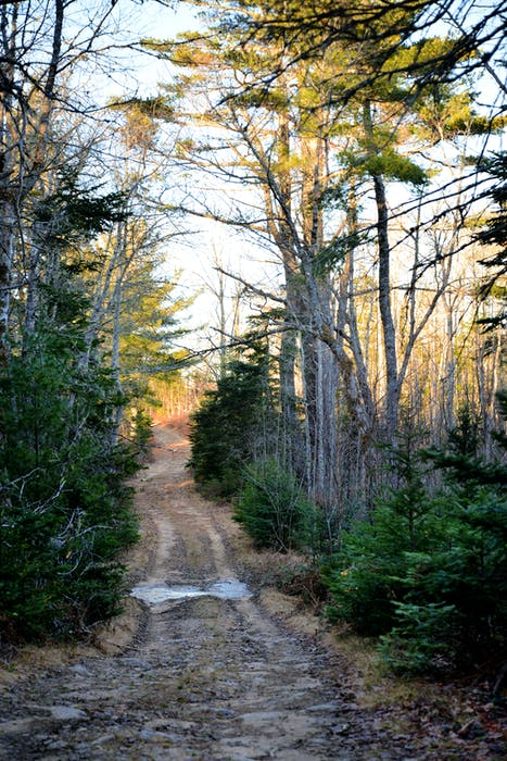The dirt trail that leads to the Roxbury settlement deep in the woods. - Contributed
