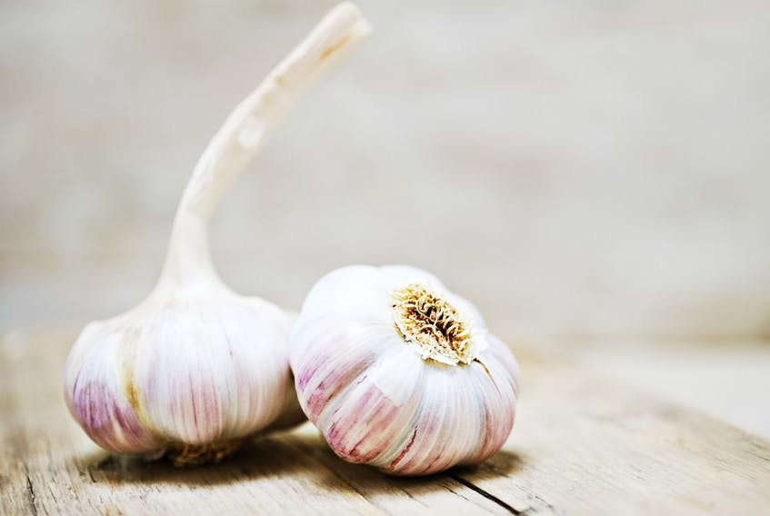 Early fall planting gives garlic bulbs time to develop strong root systems.