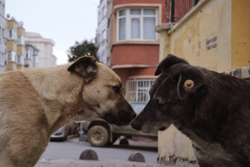 Two dogs share a muzzle-to-muzzle nuzzle in Stray.