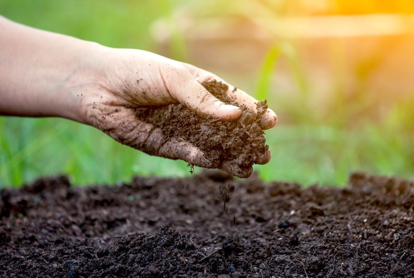 Growing quality vegetables starts with taking care of your soil.