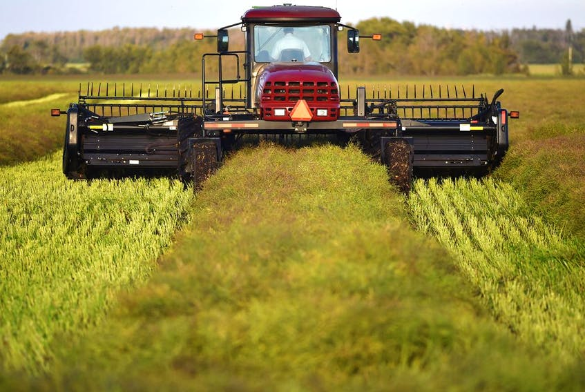 A farmer driving a swather cuts a canola crop, forming them into windrows during harvest in a field near the International Airport in Edmonton, September 4, 2019. Ed Kaiser/Postmedia