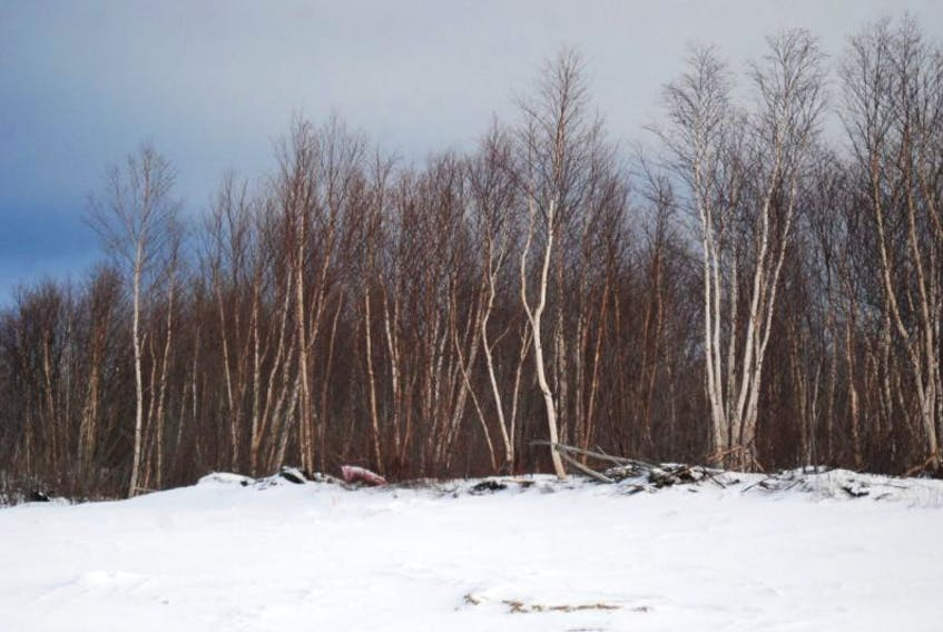 The province has just announced a pilot project for online renewal of domesti c  wood cutting permits. The project will run in specified regions only with rem aining  areas coming online at an unspecified date.