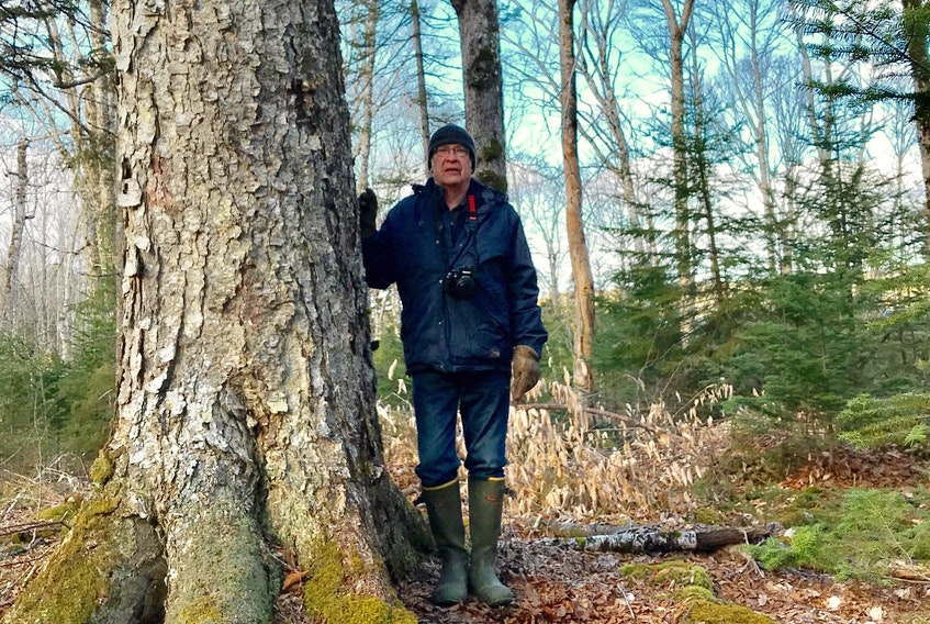 Biologist Bob Bancroft toured Crown forest at Corbett Lake April 28 and described it as intact and unique. He said a fraction of one per cent of forests in Nova Scotia are as complete with species and ground cover as the woods south of Bridgetown on the Neaves Road.