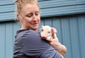 Tiffany Duncan, who tends to the herd at Beck Farms in North Kingston, carefully holds a piglet.