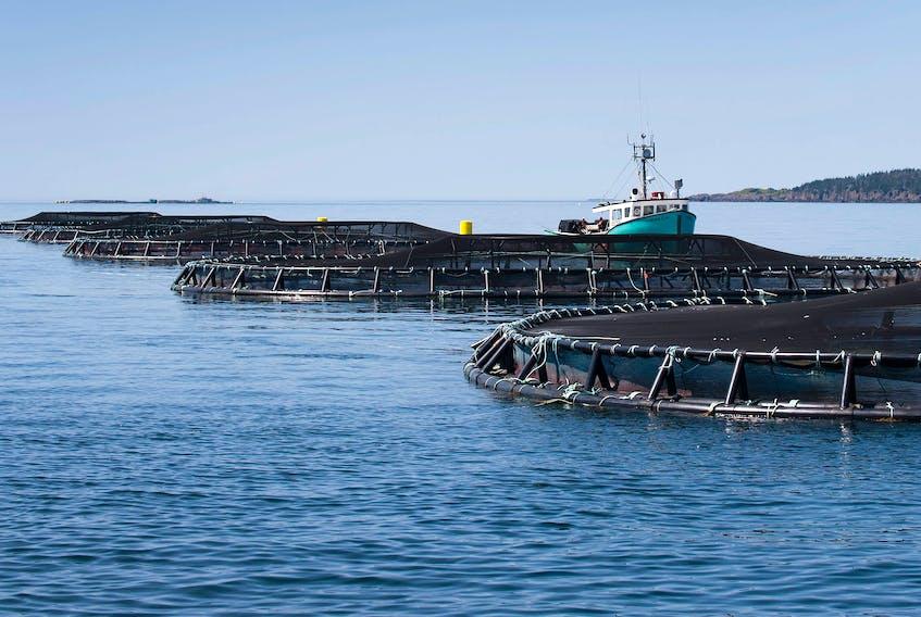A Cooke Aquaculture salmon farm in Nova Scotia.