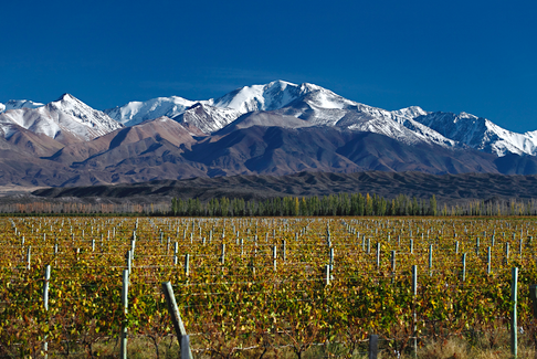 Canada is the third-largest market for Argentina's wine industry. - Contributed.