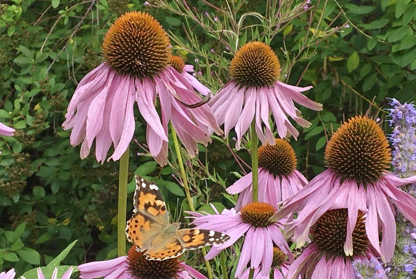 When planning new garden beds, consider the bees and butterflies. Popular pollinator plants include coneflowers, asters, bee balm, and milkweed.