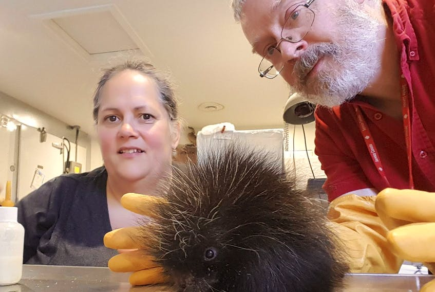 Murdo Messer is shown with his late wife Helene Van Doninck at the Cobequid Wildlife Rehabilitation Centre in Hilden. The couple founded the centre and shared a particular affection for porcupines.