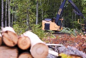 Forest harvesting won't stop just because Northern Pulp stops, writes Don Wilson. - File