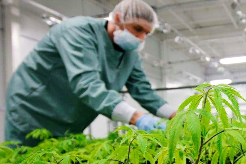 Zenabis Global Inc.'s 255,000-square-foot cannabis cultivation facility in Stellarton will produce up to 18,500 kilograms of dried cannabis annually and sustain around 200 jobs at full production.