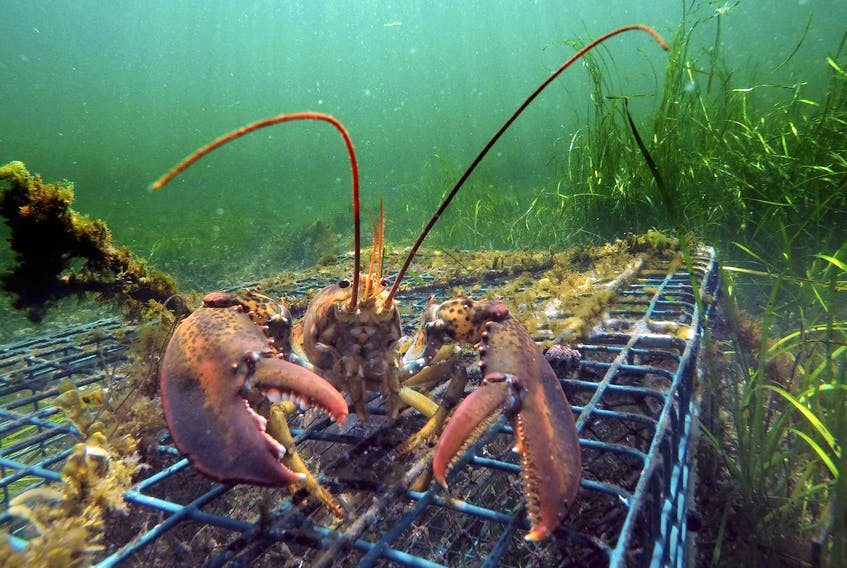 Eric Oliver, assistant professor of physical oceanography at Dalhousie University, says as climate warms there will be more marine heat waves like what was experienced in 2012 when Maine lobsters were caught in record numbers three weeks earlier than normal causing a market glut and a price drop to $2 a pound.