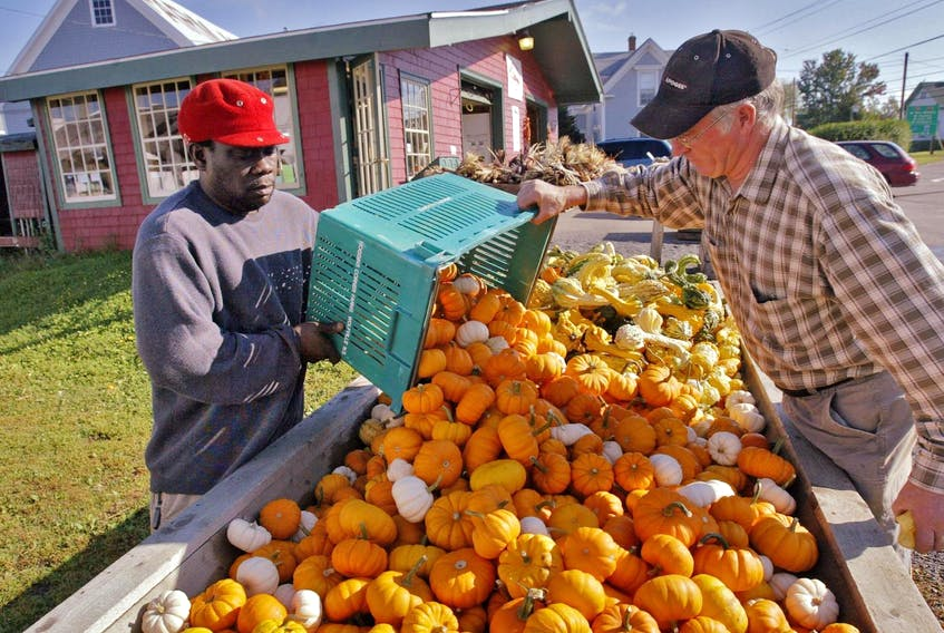 Jamaican migrant worker Garnett Beson and Noggins Corner Farm owner Andrew Bishop pour out a basket of gourds at the Greenwich farm in 2009. - Tim Krochak