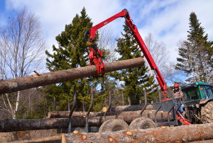 Peter Spice and his wife, Pat, mainly cut red spruce that go to various sawmills around the province, however, low quality or standing dead wood heads to Northern Pulp in Pictou County. - Aaron Beswick