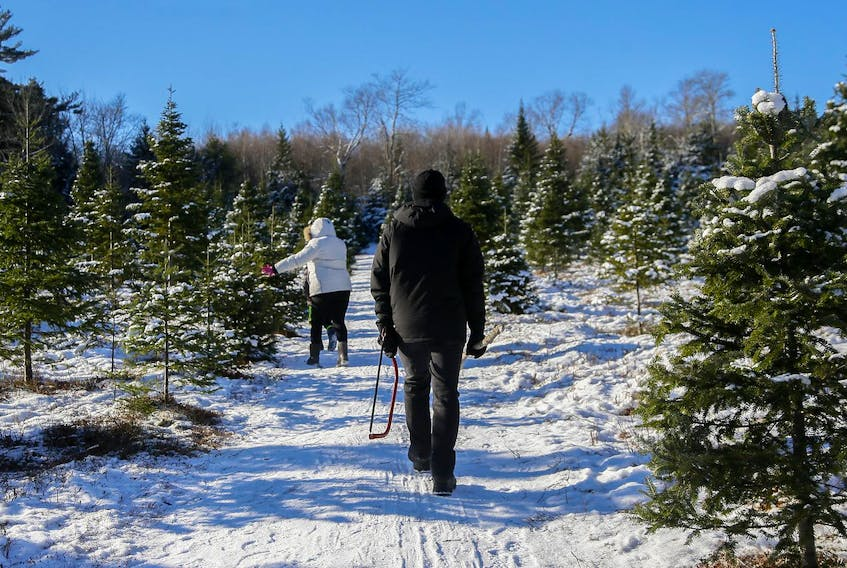 A family heads out to find their tree at a Christmas tree farm in Beaverbank, N.S., on a fine snowy morning Dec. 9, 2018. - Tim Krochak