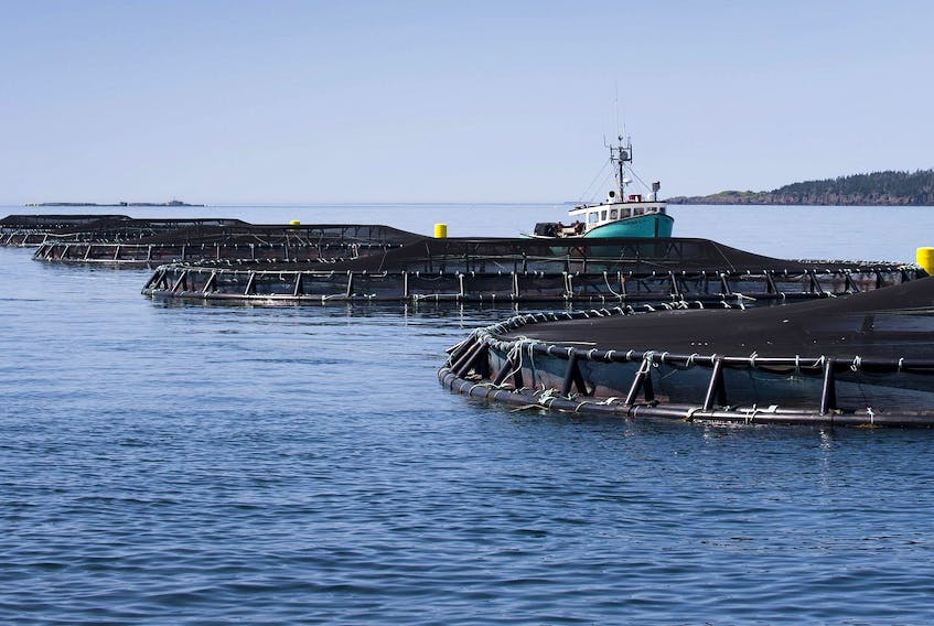 A view of one of 10 Cooke Aquaculture salmon farms in Nova Scotia; this one is in the Bay of Fundy off the shore of Meteghan. - File