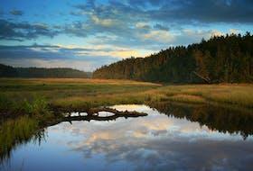 The Chignecto Protected Wilderness Area. - Irwin Barrett
