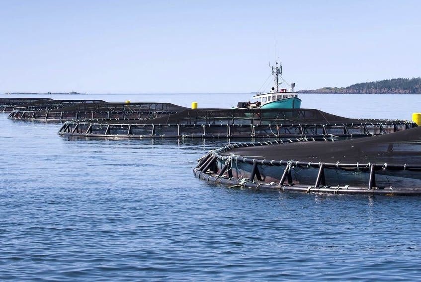 A fish farm off the shore of Meteghan. - File