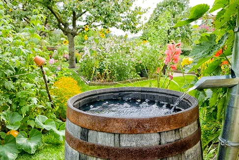 Depending on your garden's layout and your preference, you could have one large barrel or a few small barrels installed at different spots around the outside of the house. - Getty Images