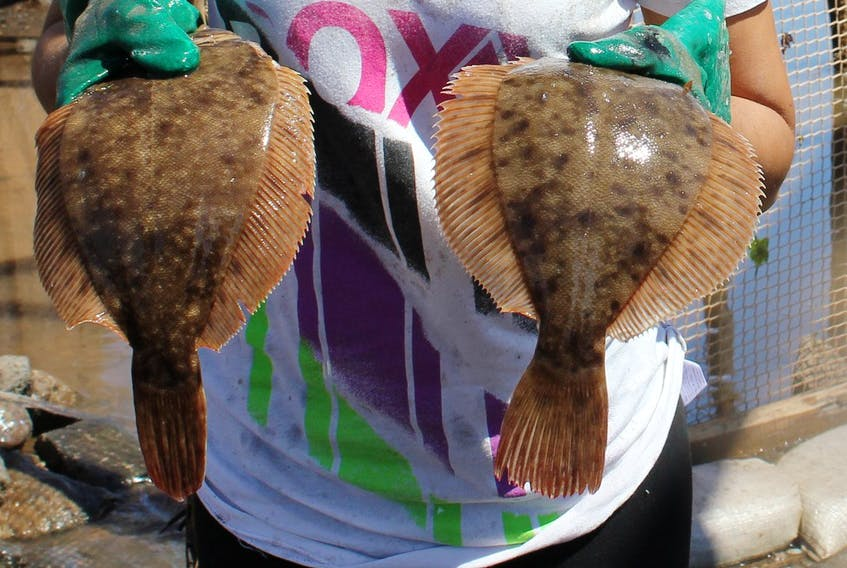 Some species of flounder are among the fish species that could be at risk over the next 30 years as the result of warming ocean temperatures, a Rutgers University study has concluded. - File