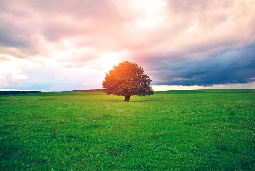 A recent study highlighted how much of an unexpectedly large effect reforestation could have on reducing greenhouse gas emissions. - 123RF