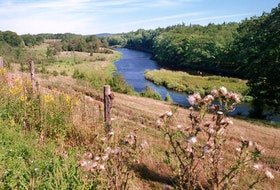 The Annapolis River flows gently through the edges of a farmer's field in Paradise. Much of the Annapolis Valley is lush, luminous and blessedly empty. - Mike Harvey / File