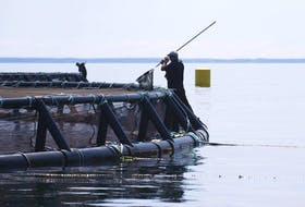 Workers tend to nets at a Cooke Aquaculture salmon farm in the Bay of Fundy in 2012. - Adrien Veczan / File