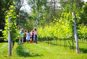 An afternoon bachelorette party goes for a vineyard tour at Dunhams Run Estate Winery. - Gina Alward