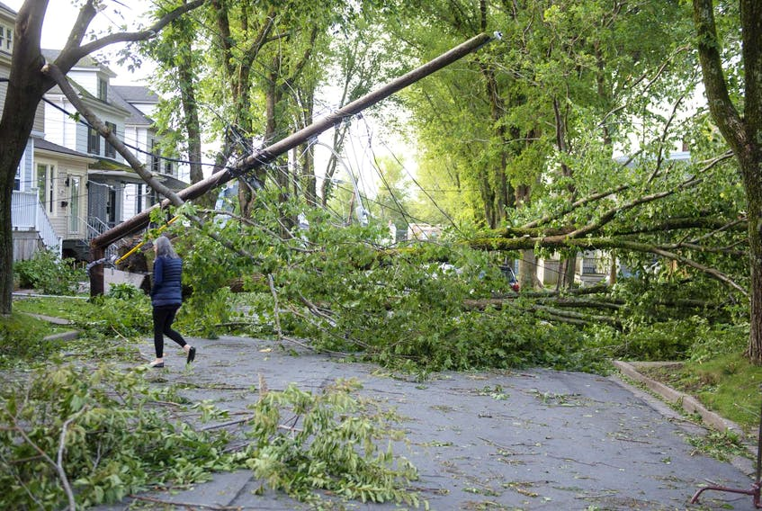 Dorian took down trees throughout the region on the weekend. This damage could be seen Sunday morning, Sept. 8, 2019, on Kline Street in Halifax. - Ryan Taplin