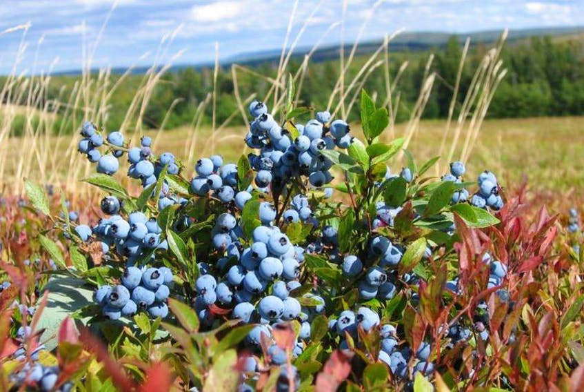 Cumberland County's two PC MLAs are urging the province to purchase surplus blueberries and use them in government institutions.