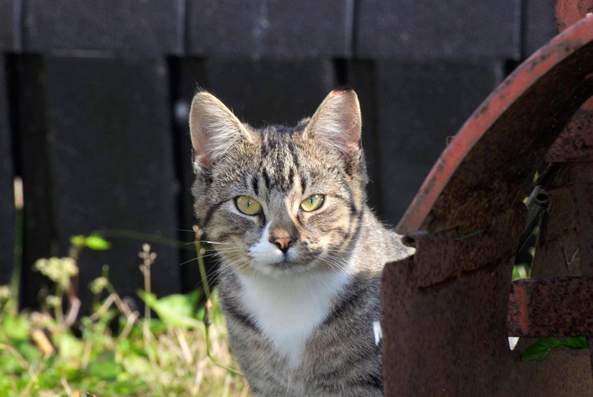 The Feral and Abandoned Cat Society is celebrating the fifth anniversary of its trap-neuter-return program.