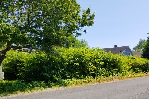 The vacant lot located at what used to be 26 Arthur St. in Glace Bay is overflowing with vegetation. With rats and raccoons regularly coming to and from the lot, residents suspect garbage is dumped there.