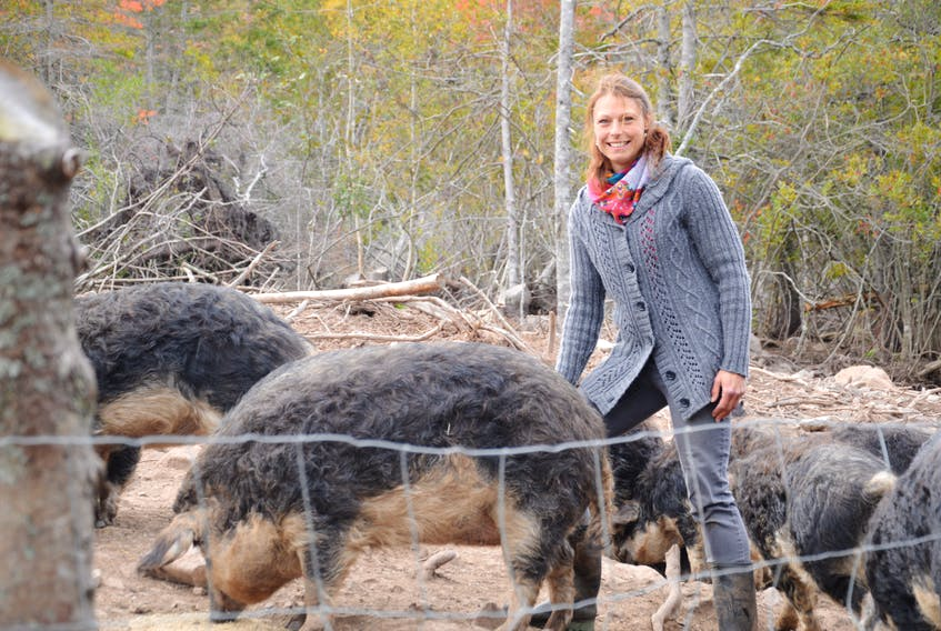 Lilac Farm owner, Tanja Welz, feeds her Mangalitsa pigs. It is the only farm with that breed of pig east of Quebec. Welz said she chose them because they can stay outside all year long, even through Cape Breton's temperamental winters. Nikki Sullivan/Cape Breton Post