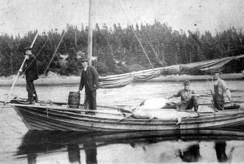 Swordfishing, Dingwall harbour, circa 1910. Contributed/Cabot Archives Collection. Reference number 79-680-3660.