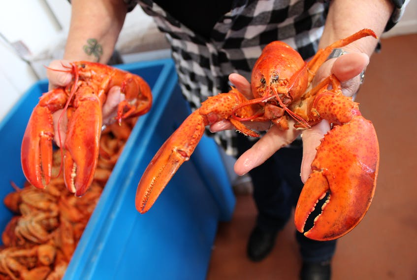 Lobster like these will soon be on sale all over Cape Breton, as various areas of the island open their seasons over the next few days.