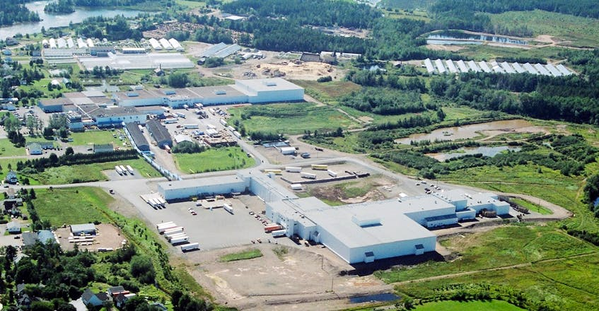 Most of the berries picked over the coming month will be processed by the hundreds of workers at Oxford Frozen Foods in Cumberland County. - Contributed