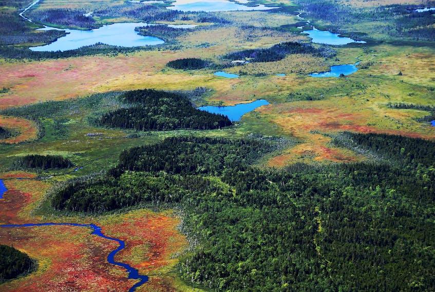 The Pugwash Estuary, where NCC has a large nature reserve that protects coastal wetlands.