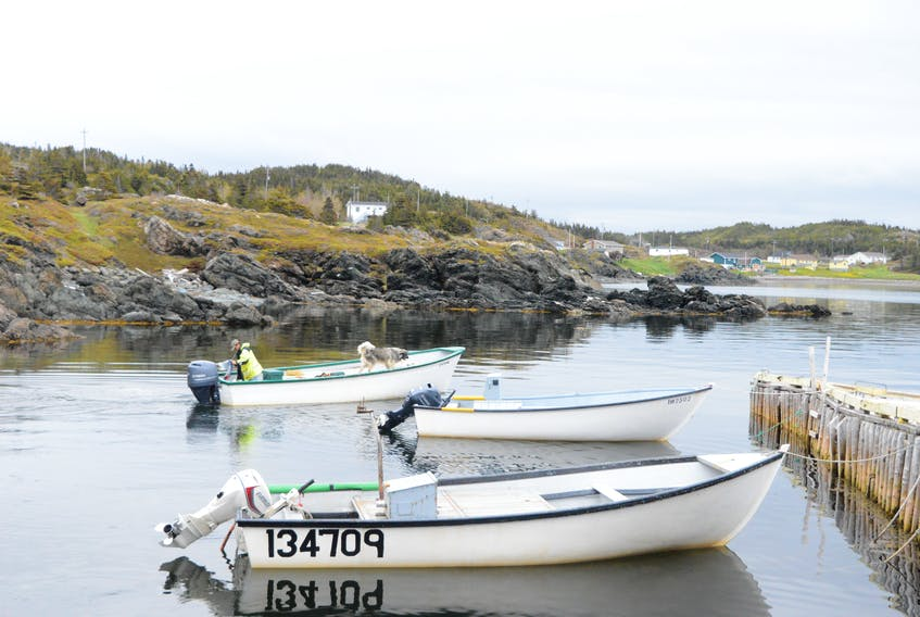 As the average age of inshore harvesters in the province increases, many in the province's fishery say a need for new people prepared to take over enterprises is hitting a crucial point.