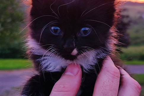 Just look at those eyes. David Long came across a litter of kittens in a barn in Upper South River, Antigonish County, N.S.  I don't know if this fluffy black kitty has a name, but it sure is adorable.  I can't tell you how many wonderful hours I've spent sitting on a straw bale playing with kittens like this one.