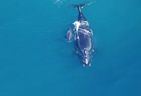 The first North Atlantic right whale baby of the 2019-2020 calving season was spotted off the coast of Georgia this week.  - Clearwater Marine Aquarium under NOAA permit # 20556-01