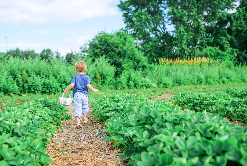 Farmers across Nova Scotia and beyond have been working hard to ensure Canadians have produce on their tables despite the challenges posed by the pandemic.