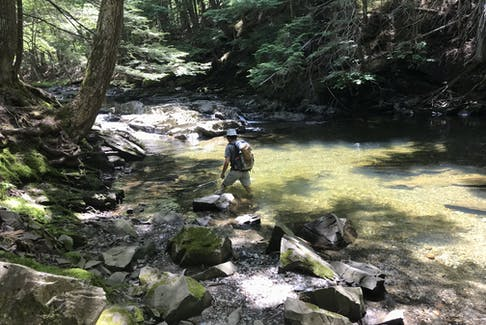 Jim Foster hikes through Little Meander River on a sunny day. - Photo Joanna McIntyre.