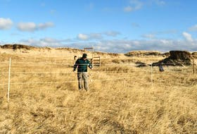 A Parks Canada team member installs a trial enclosure fence in preparation for the Fences in the Sand research project on Sable Island National Park Reserve. -- PARKS CANADA
