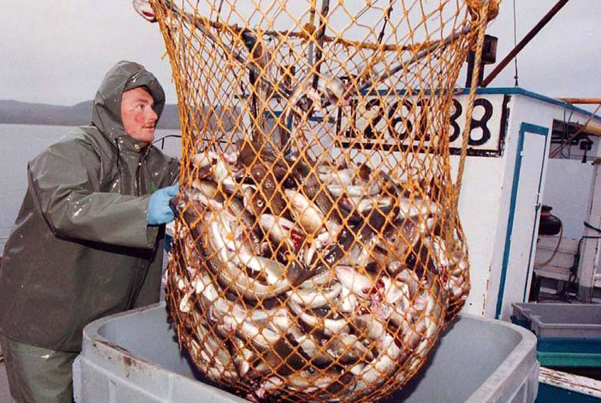Fishermen took to the waters off southern Newfoundland in May 1997 in the first commercial cod fishery since stocks collapsed. Leaders from Canadian and international fisheries organizations are gathering in Halifax this week as part of the G7 Ministerial Meetings.