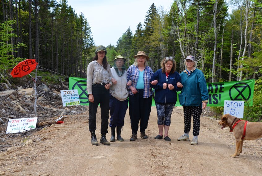 Extinction Rebellion Forest Protectors and supporters held a protest June 9 at the logging road near Corbett Lake where an old, biodiverse forest is scheduled for harvesting. On June 10 they were still on site with some having stayed overnight. They were back in the evening as well and stayed the night.