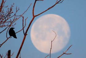 No murder here, only one solitary crow backlit by a stunning full moon.  This creative photo is the work of Judy LeBlanc-Brennan. Taken in Florence, Cape Breton.