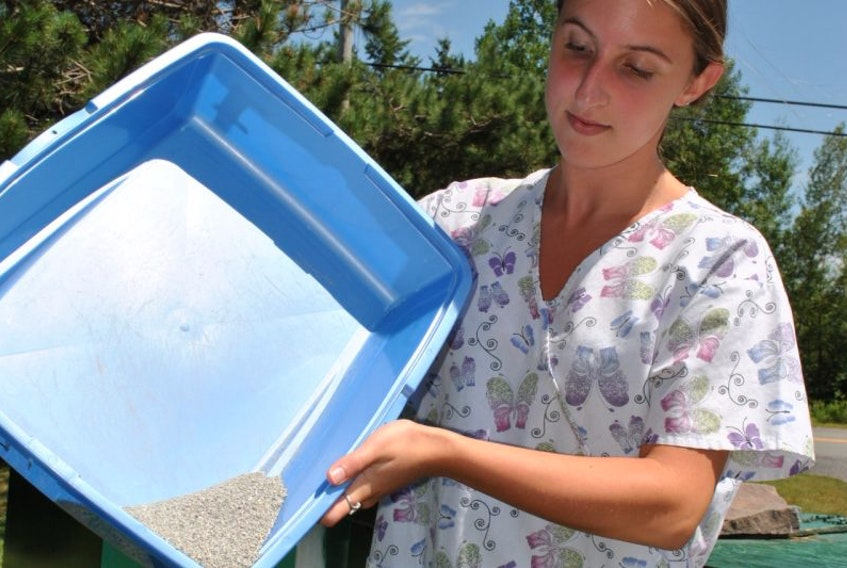 Casey Doucet, a summer student at the SPCA shelter in Granton, empties cat litter into the green cart. Kitty litter is now accepted as part of the Pictou County Solid Waste organics program.
