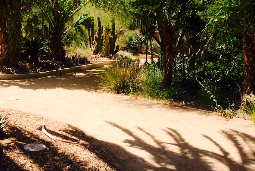 The Botanical Garden at Springs Preserve in Las Vegas is home to a vast collection of cacti and succulents.