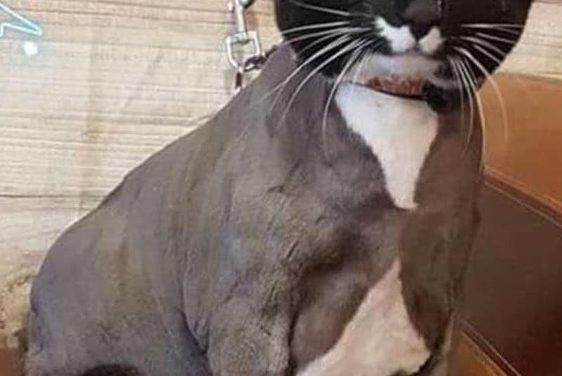 Mittens the cat. - Contributed