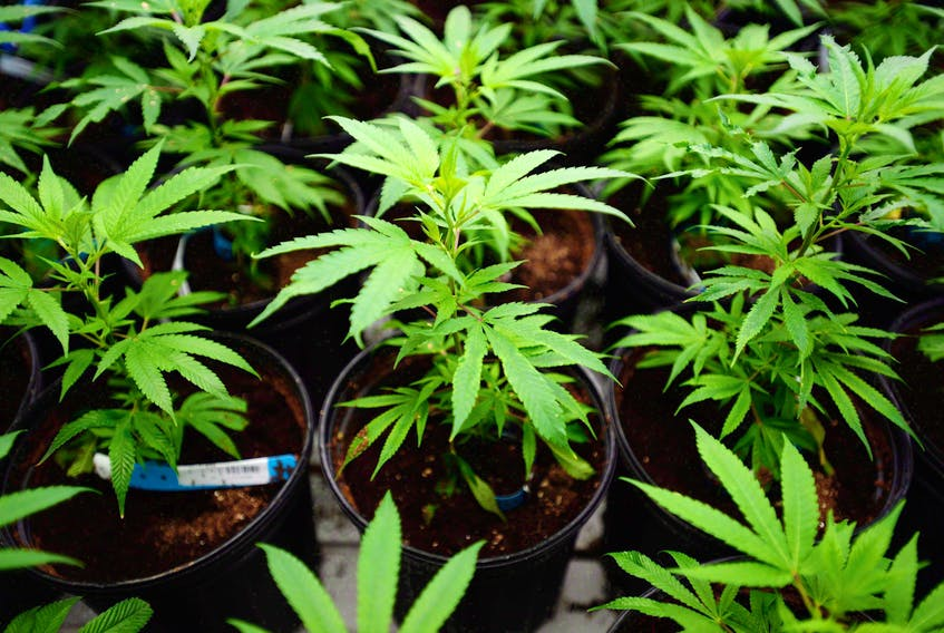 St. Anthony business leaders don't believe the cannabis industry will be profitable on the Great Northern Peninsula.