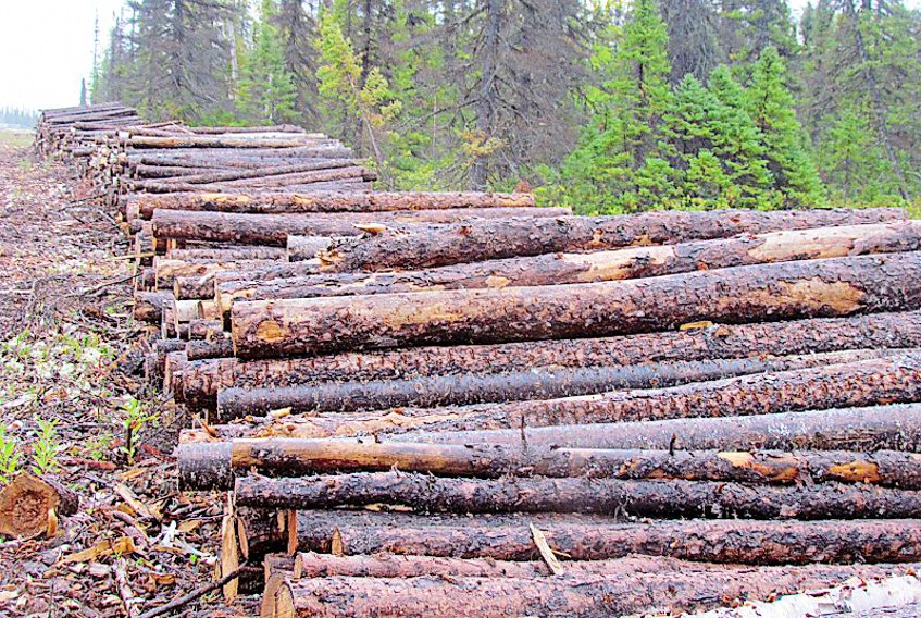 Whether or not two five-year permits in forestry management areas 17 and 18 on the Northern Peninsula have been issued requires clarification.